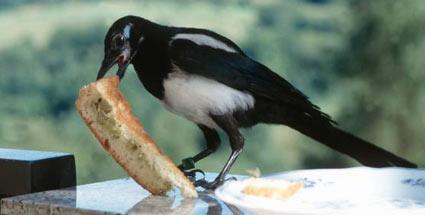 zugvögel ernährung omega 3